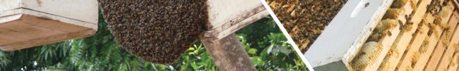 For all your modern beekeeping services